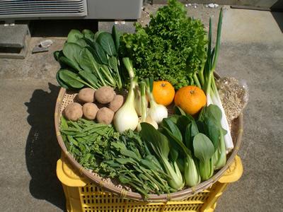 3月の野菜Lセットの例