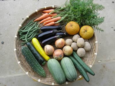 7月の野菜Lセットの例