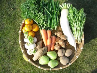 11月の野菜Lセットの例
